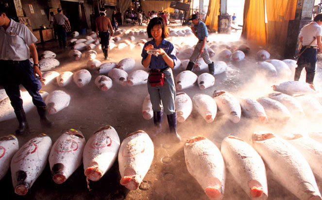 Tsukiji Fish Market in Japan
