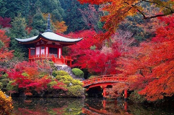 japan in autumn featuring a beautiful temple